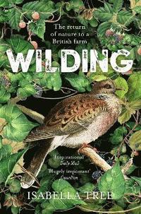 bokomslag Wilding