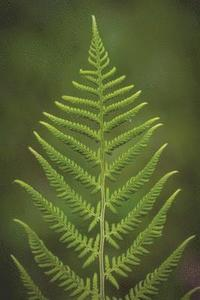bokomslag The Green Fern Journal: 150 Page Lined Notebook/Diary