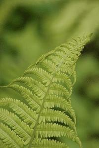 bokomslag Green Fern Frond Plant Journal: 150 Page Lined Notebook/Diary