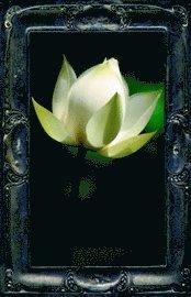 bokomslag Letting The Lotus Bloom