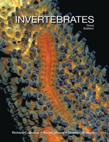 bokomslag Invertebrates