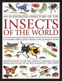 bokomslag Illustrated Directory of Insects of the World