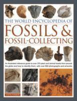 bokomslag World Encyclopedia of Fossils &; Fossil-collecting