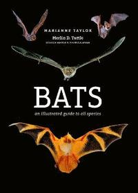 bokomslag Bats