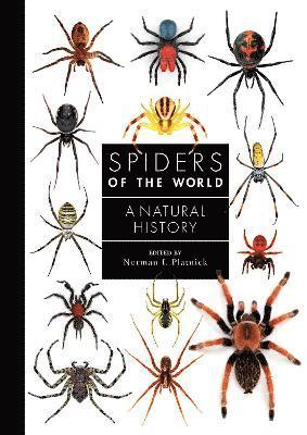 bokomslag Spiders of the World: A Natural History