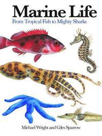 bokomslag Marine Life