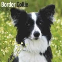 bokomslag Border collie calendar 2018