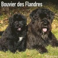 bokomslag Bouvier des flandres calendar 2018