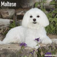 bokomslag Maltese calendar 2018