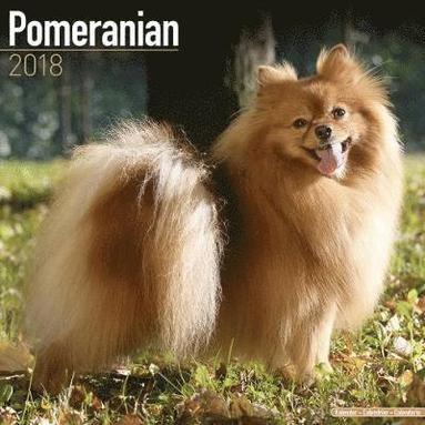 bokomslag Pomeranian calendar 2018
