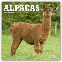 bokomslag Alpacas 2018