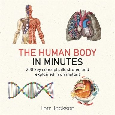 bokomslag Human body in minutes