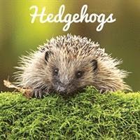bokomslag Hedgehogs w