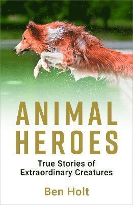 bokomslag Animal heroes - true stories of extraordinary creatures