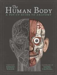 bokomslag The Human Body