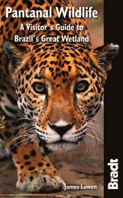 bokomslag Pantanal Wildlife