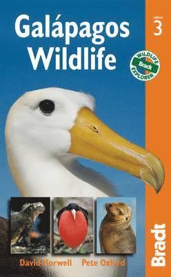 bokomslag Galapagos Wildlife