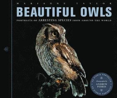 bokomslag Beautiful Owls