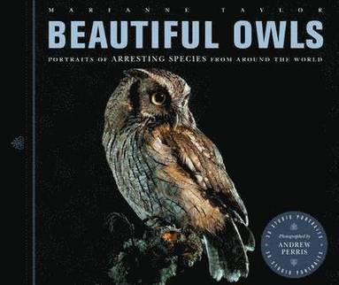 bokomslag Beautiful owls - portraits of arresting species from around the world