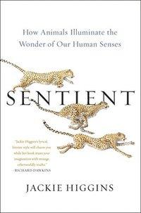 bokomslag Sentient: How Animals Illuminate the Wonder of Our Human Senses