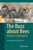 bokomslag The Buzz about Bees: Biology of a Superorganism