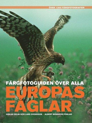bokomslag Färgfotoguiden över alla Europas fåglar : över 1300 färgfotografier