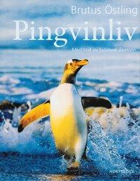 bokomslag Pingvinliv