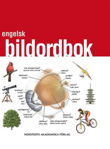bokomslag Engelsk bildordbok : svenska - engelska