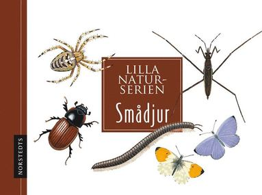 bokomslag Smådjur : Lilla naturserien