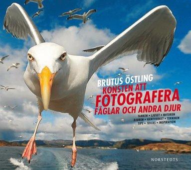 bokomslag Konsten att fotografera fåglar och andra djur