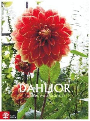 bokomslag Dahlior