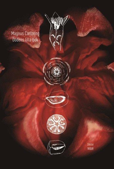 bokomslag Dödens lilla bok : dikter