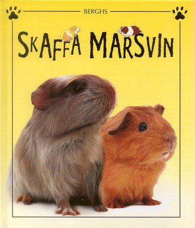 bokomslag Skaffa marsvin