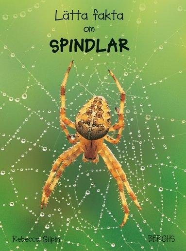 bokomslag Lätta fakta om spindlar