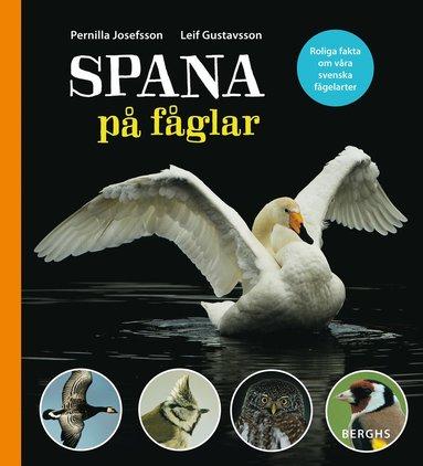 bokomslag Spana på fåglar