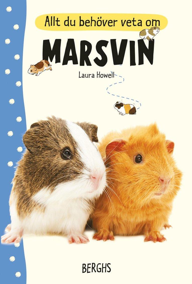 Allt du behöver veta om marsvin 1
