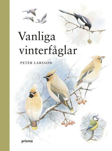 bokomslag Vanliga vinterfåglar
