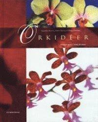 bokomslag Orkidéer