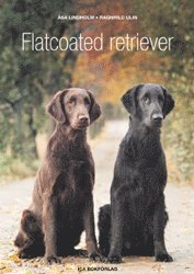 bokomslag Flatcoated retriever