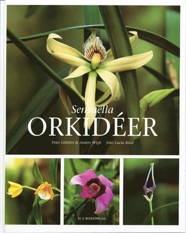 bokomslag Sensuella orkidéer