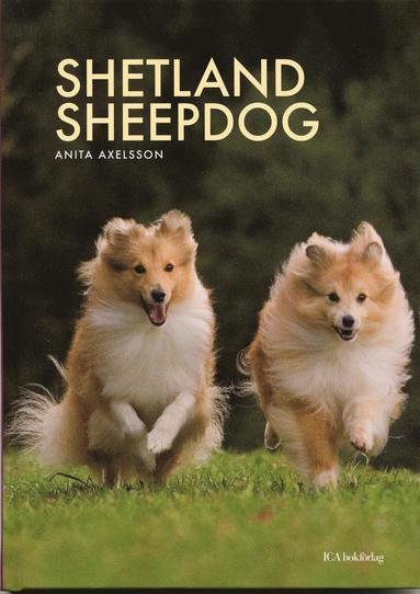 bokomslag Shetland sheepdog