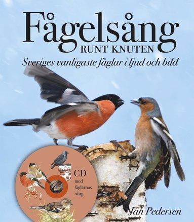 bokomslag Fågelsång runt knuten : Sveriges vanligaste fåglar i ljud och bild