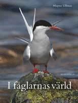 bokomslag I fåglarnas värld