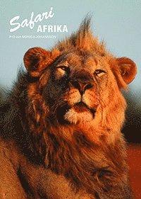 bokomslag Safari Afrika
