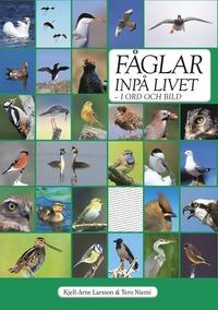 bokomslag Fåglar inpå livet : i ord och bild