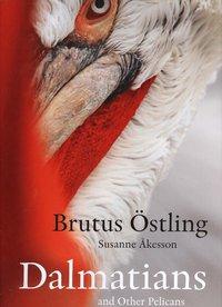 bokomslag Dalmatians and other pelicans