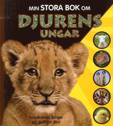 bokomslag Min stora bok om djurens ungar