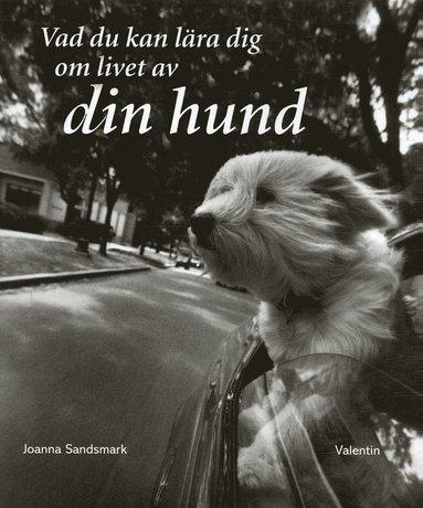 bokomslag Vad du kan lära dig om livet av din hund