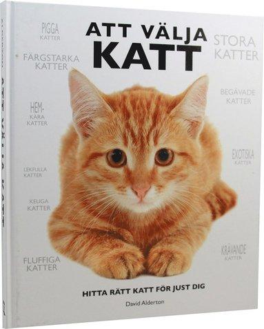 bokomslag Att välja katt : hitta rätt katt för just dig