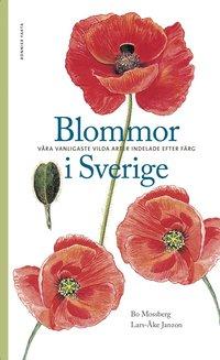 bokomslag Blommor i Sverige : våra vanligaste vilda arter indelade efter färg